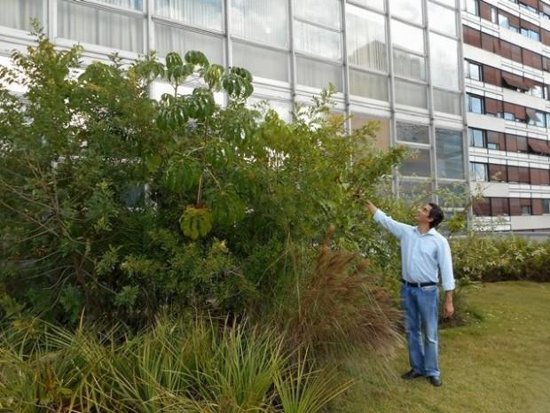 O botânico Ricardo Cardim inspeciona a pequena capoeira que plantou no topo do edifício da Gazeta
